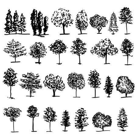 Árboles gráfico de la mano vector dibujado dibujo grabado del doodle aislado en el fondo blanco, estilo de la vendimia, la plantilla de patrón de diseño, colección de pincel, impresión, producto ecológico orgánico elementos del paquete