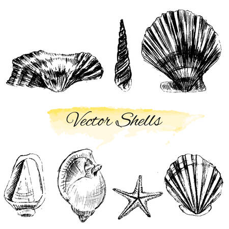 Seashells hand drawn vector graphic etching sketch isolated on white background, collectionunderwater artistic marine element design for greeting cards, print design, cover page magazine, scrapbooking Illustration