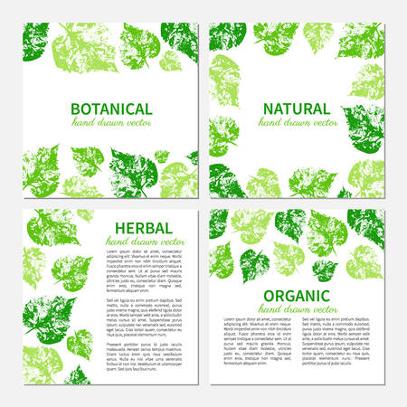 natural beauty: Hand drawn graphic green leaves isolated on white, Set of 4 eco square cards, banners with designed frame and text, template perfect for cosmetic,beauty salon, store natural and organic product