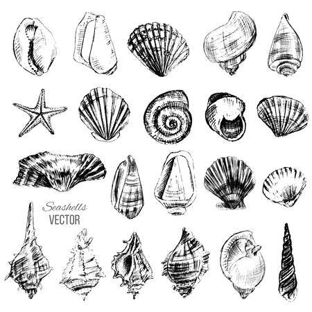 Seashells hand drawn vector graphic etching sketch isolated on white background, collection underwater artistic marine element design for greeting card, print design, cover page magazine, scrapbooking