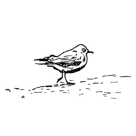 webbed: Seagull vector sketch isolated on white background, Hand drawn illustration, vintage engraving style, layout for touristic postcard, poster, calendar template, page idea, design package, advertising