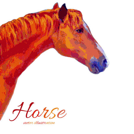 Watercolor horse hand drawn colorful vector illustration isolated on white background Illustration