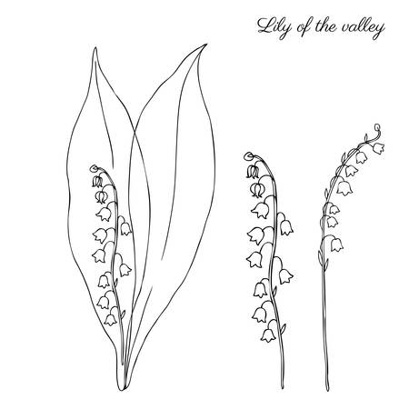 officinal: Lily of the valley, Convallaria flower, muguet isolated on white background botanical hand drawn sketch vector doodle illustration for design package cosmetic, medicine, greeting card, wedding invite