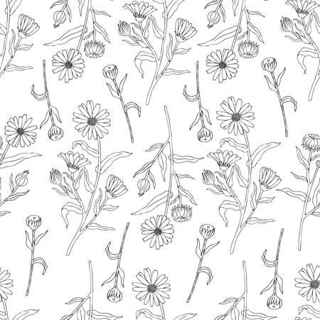 calendula: Seamless floral pattern, Calendula flower isolated on white background.