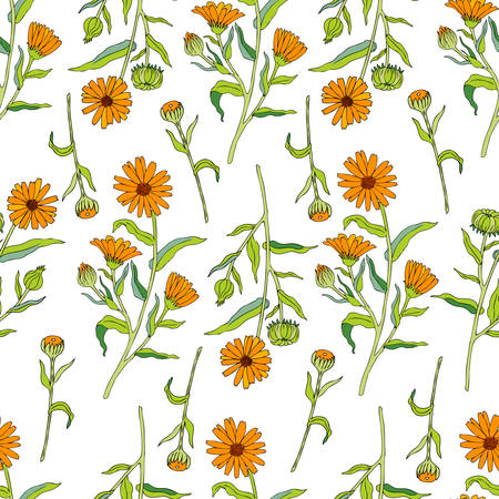 calendula: Seamless floral pattern, Calendula flower isolated on white background, botanical hand drawn doodle vector illustration marigold for design package tea, cosmetic, greeting card, wedding invitation