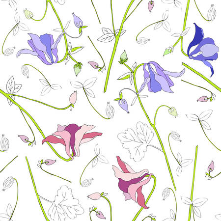 Aquilegia flower hand drawn graphic vector botanical illustration.