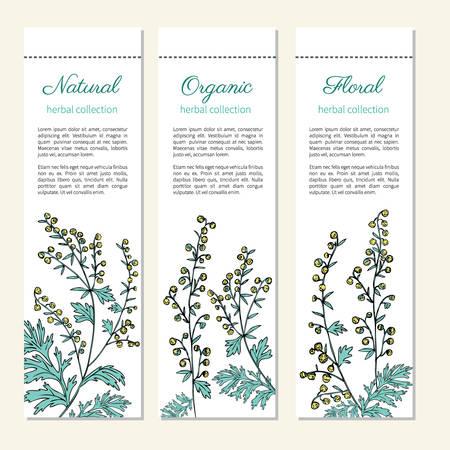 sagebrush: Artemisia absinthium, absinthe wormwood hand drawn vector ink color sketch isolated on white, Absinthe plant. Illustration