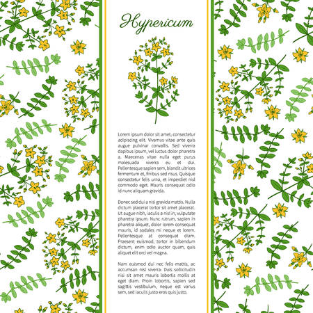 Hypericum, St. Johns wort or Hartheu branch vector sketch hand drawn healing herb isolated on white, Tutsan herbs, Seamless vector pattern, Collection herb for card, package cosmetic, medicine, tea