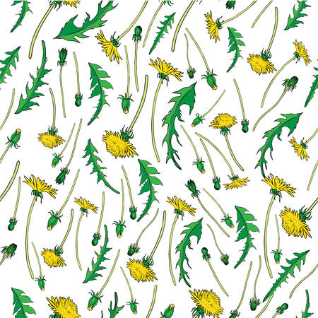 weeds: Dandelion flower, bud, leaves hand drawn vector ink color sketch isolated on white,  Vector seamless pattern, graphic floral texture background for cosmetic, design package tea, textile, wallpaper Illustration