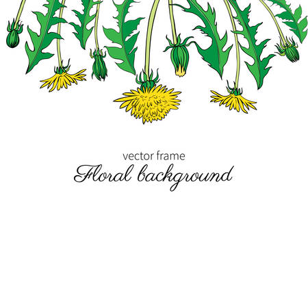 weeds: Dandelion flower, bud, leaves hand drawn vector ink colorful sketch isolated on white background, Decorative graphic floral frame for natural cosmetic, design package tea, florist shop, wedding invite