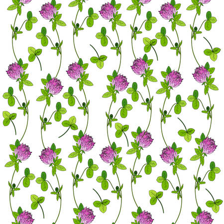 trifolium: Red clover, shamrock wild field flower hand drawn vector color sketch isolated on white, Vector seamless pattern, graphic floral texture background for cosmetic, design package tea, wallpaper