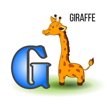 g giraffe: Cute Zoo alphabet G with cartoon giraffe, wild african kid animal vector illustration isolated on background, Education for children, preschool, ABC poster for learn to read, character design, mascot Illustration