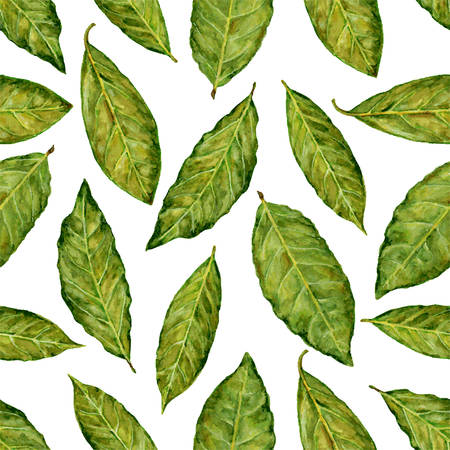 Bay leaf watercolor vector illustration isolated on white background, Hand drawn seamless pattern, Design food, Organic fresh spice ingredient for healthy market, restaurant menu, kitchen aromatherapy Stock Vector - 78930225