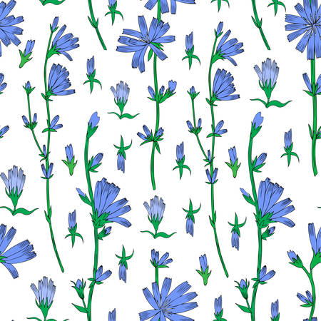 Naadloze vector bloemmotief, witlof bloem hand getekend grafische botanische illustratie, doodle kleur schets geïsoleerd op witte achtergrond, medische andijvie plant lijntekeningen voor ontwerp verpakking, cosmetische