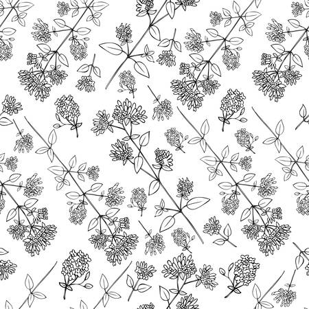 Seamless floral pattern, Blossoming oregano flowers vector doodle sketch hand drawn healing herb isolated on white background, food botanical illustration, design herb for cosmetics, menu, wallpaper