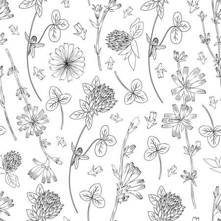 Naadloze vector bloemmotief, witlof bloem, medische andijvie veldplant, rode klaver, klaver hand getrokken illustratie, doodle schets geïsoleerd op een witte achtergrond, voor ontwerp verpakking, cosmetica