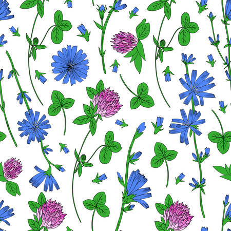 trifolium: Seamless vector floral pattern, Chicory flower, medical endive field plant, Red clover, shamrock hand drawn illustration, doodle sketch isolated on white background, for design packaging, cosmetics