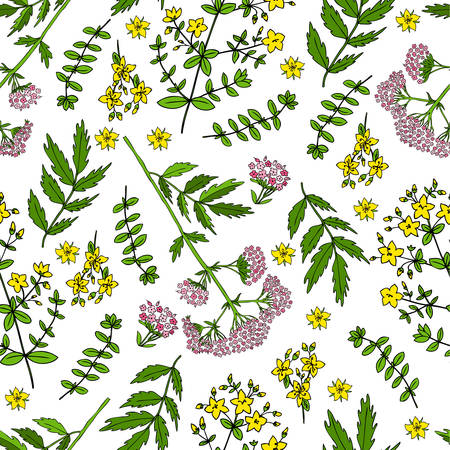 Hypericum, St. Johns wort or Hartheu branch, Tutsan herbs, Valeriana officinalis isolated on white background, Hand drawn vector seamless floral pattern, kitchen spicy texture, for design package tea Illustration