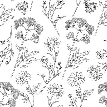 Seamless floral vector pattern, Chamomile wild field flower, Valeriana officinalis isolated on white background, hand drawn daisy doodle illustration for design package tea, cosmetic, medicine, paper