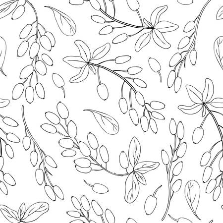 Seamless pattern Barberry hand drawn branch vector sketch isolated on white background, black line art berry, Natural spicy herb, cooking ingredients for design package tea, cosmetic, medicine, fabric Illustration