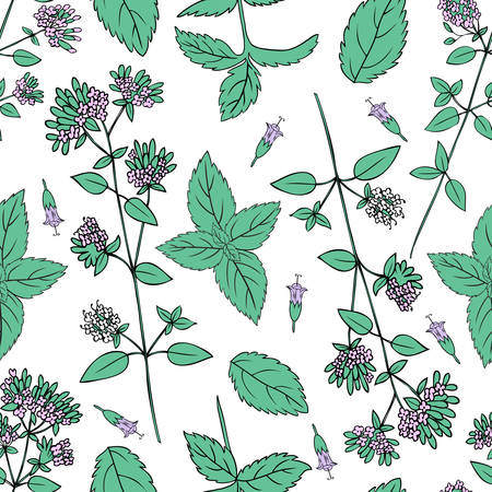 Seamless floral pattern, Mint branch, peppermint leaves, Blossoming oregano flowers vector doodle sketch hand drawn healing herb isolated on white background, design herb for cosmetic, menu, wallpaper Illustration