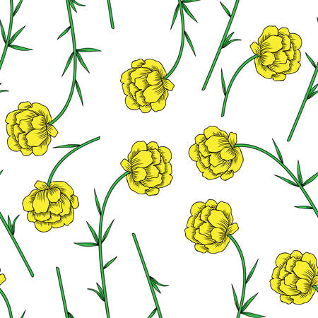 Trollius asiaticus flowers, globeflower hand drawn vector sketch isolated on white, seamless herbal pattern Ranunculus for design package, medicine, wedding invitation, greeting card, cosmetic, paper Illustration