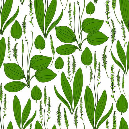 Herbal plant pattern.