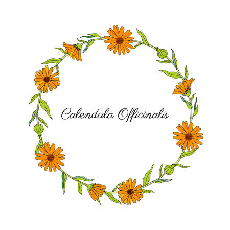Calendula flower wreath isolated on white background, decorative round frame hand drawn marigold, vector illustration for design package tea, cosmetic, natural medicine, greeting cards, wedding invite