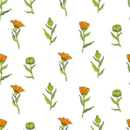 Seamless floral pattern, Calendula flower isolated on white background, botanical hand drawn vector illustration marigold for design package tea, cosmetic, greeting cards, wedding invitation, textile