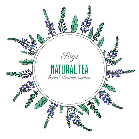Round frame, Sage flower, bud, leaves set vector isolated on white background, Hand drawn healing herbs, colorful illustration salvia officinalis, design plant for cosmetic, package tea, medicine