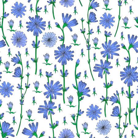 Naadloze vector bloemmotief, witlof bloem hand getekend grafische botanische illustratie, kleurrijke schets geïsoleerd op witte achtergrond, medische andijvie plant lijntekeningen voor ontwerp verpakking, behang Stock Illustratie