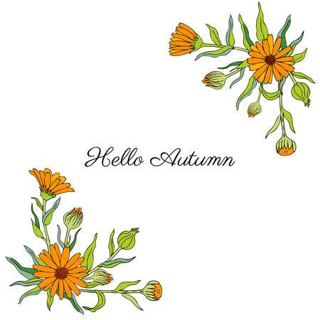 금 송 화 꽃 흰색 배경에 고립 일러스트