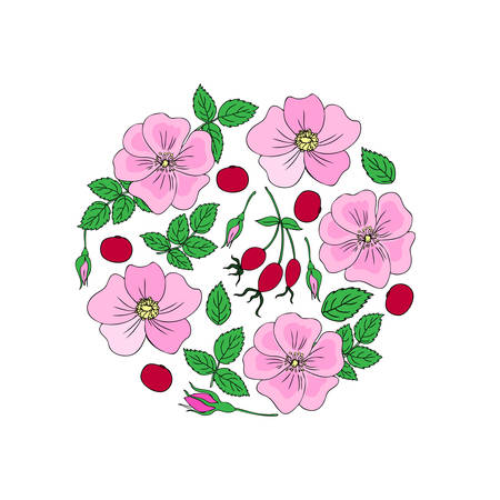 hand drawn dogrose berry vector illustration isolated on white background