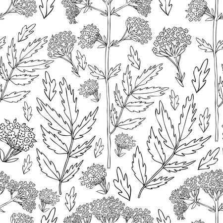 Seamless floral pattern, Valeriana officinalis hand drawn vector ink illustration isolated on white background.