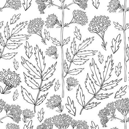 Motif floral sans soudure, Valeriana officinalis dessinés à la main illustration d'encre vector isolée sur fond blanc.