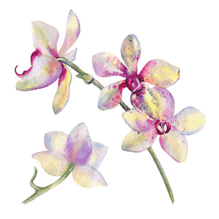 Orchid flowers watercolor hand drawn botanical illustration isolated on white background for design pattern, package cosmetic, greeting card, wedding invitation, florist shop, printing, beauty salon Stock Vector - 94499898