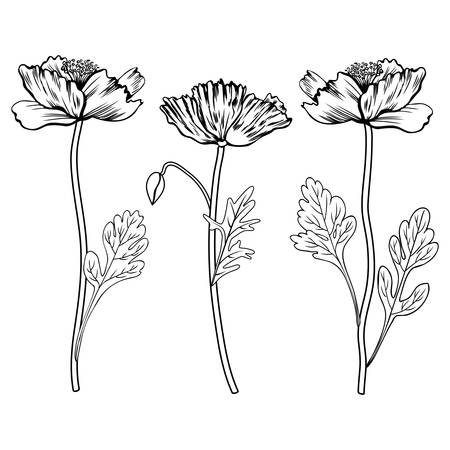 Vector of poppy flowers bud leaves royalty free cliparts vectors poppy flowers bud vector mightylinksfo Choice Image