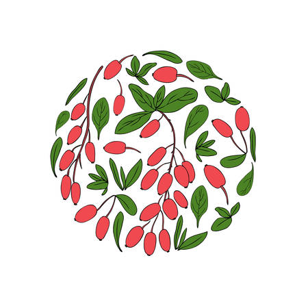 Round frame, Barberry hand drawn vector isolated on white background, decorative fruit texture, colorful fresh berry, Natural spicy herb, cooking ingredient for design package tea, cosmetic, medicine