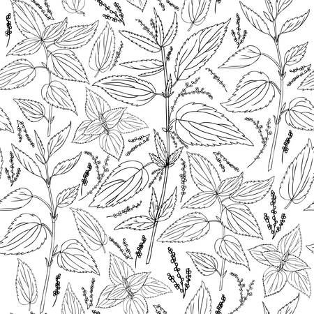 Seamless floral pattern, Nettle wild field flower isolated on white background, hand drawn ink sketch vector, line art illustration Urtica dioica for design package tea, cosmetics, natural medicine