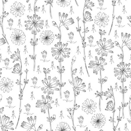 Seamless vector floral pattern Chicory flower hand drawn ink botanical illustration, doodle sketch isolated on white background, medical endive plant line art for design packaging cosmetic, herbal tea Stock Illustratie