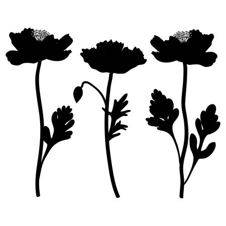 Poppy flowers vector hand drawn illustration isolated on white background, decorative black silhouette, floral design set for greeting card, package cosmetic, wedding invitation, florist shop