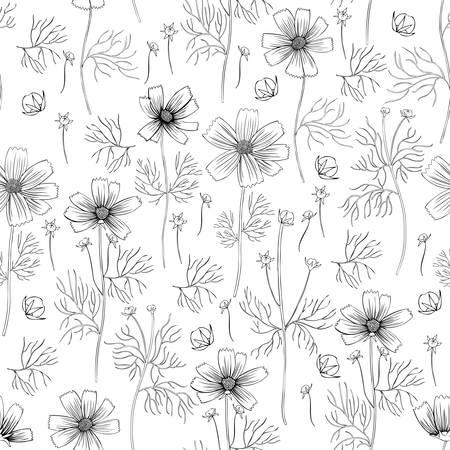 Seamless floral vector pattern, Kosmos flower, kosmeya hand drawn ink sketch, illustration, wild flower astra, design for greeting card, wedding invitation, cosmetic packaging, beauty salon, wallpaper Ilustrace