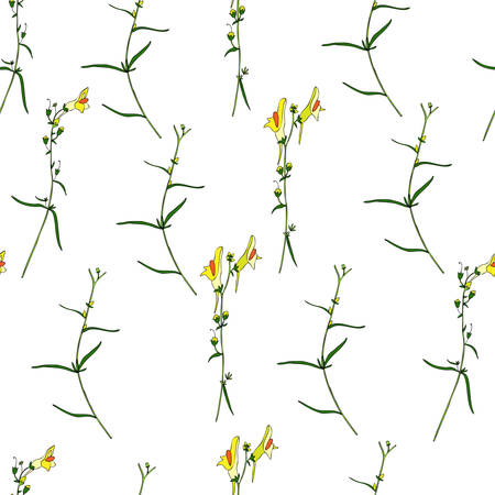 Seamless floral pattern Linaria vulgaris, common toadflax, yellow toadflax or butter-and-eggs is a species of toadflax, snapdragon, Plantaginaceae family, hand drawn vector colorful illustration Ilustrace