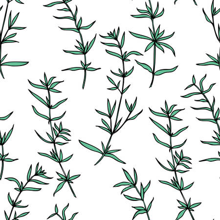 Seamless herbal pattern Savory hand drawn vector botanical illustration, health medical plants and herbs isolated on white background, texture spices for design kitchen, menu, natural organic product