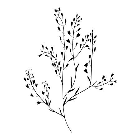 Capsella flower, Shepherd's purse, Capsella bursa-pastoris, the entire plant, hand drawn vector illustration, doodle ink silhouette isolated on white background for design label cosmetic, organic shop