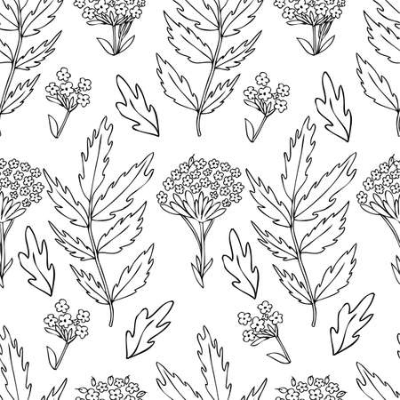 Seamless floral pattern, Valeriana officinalis hand drawn vector ink sketch illustration isolated on white background, for design package cosmetic, organic medicine, greeting cards, herbal green tea Stock Photo
