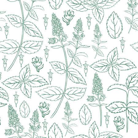 Foglia di menta, fiore ramo menta piperita isolato su sfondo bianco, reticolo floreale senza giunte di vettore disegnato a mano, struttura della cucina erba piccante, Doodle ingrediente di cottura per tè pacchetto design, cosmetici