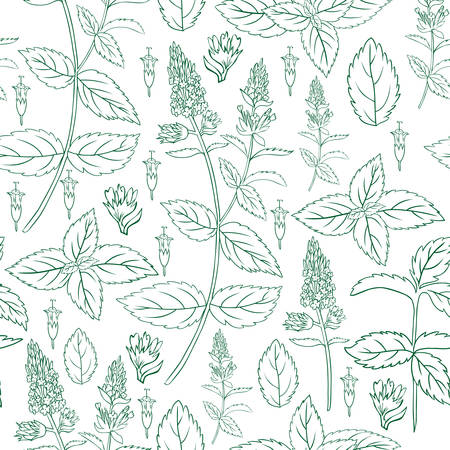 Mint leaf, blossom branch peppermint isolated on white background, Hand drawn vector seamless floral pattern, spicy herb kitchen texture, Doodle cooking ingredient for design package tea, cosmetics