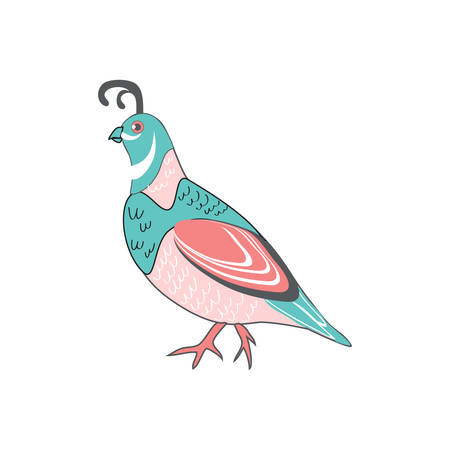 Cute cartoon quail vector colorful illustration wild animal isolated on white background, decorative bird for character design, mascot, greeting card, children invitation, zoo alphabet, menu Vettoriali