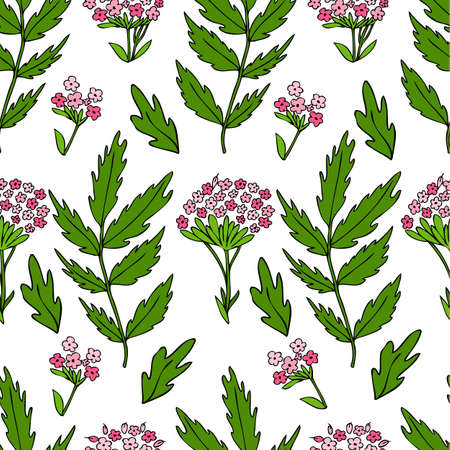Seamless floral pattern, Valeriana officinalis hand drawn vector colorful illustration isolated on white background, for design package cosmetic, organic medicine, greeting cards, herbal green tea
